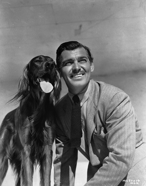 american-actor-clark-gable-posing-with-a-red-setter-news-photo-1588696264.jpg
