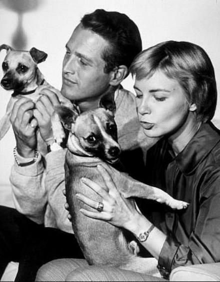 Interesting Vintage Photos of Classic Movie Stars Spending Time With Their Pets (44).jpg