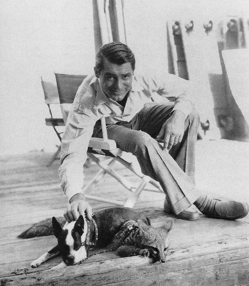 boston-terrier-dog-Cary-Grant.jpg