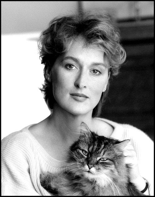 Meryl-Streep-cats.jpg